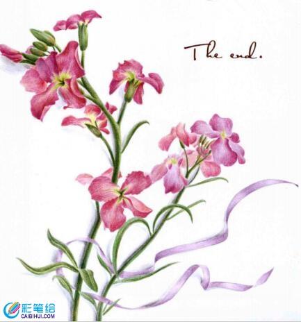 彩铅画紫罗兰步骤- 素描彩铅画画水彩-彩笔绘