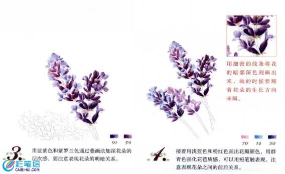 彩铅画花卉教程图解:彩铅薰衣草的画法步骤
