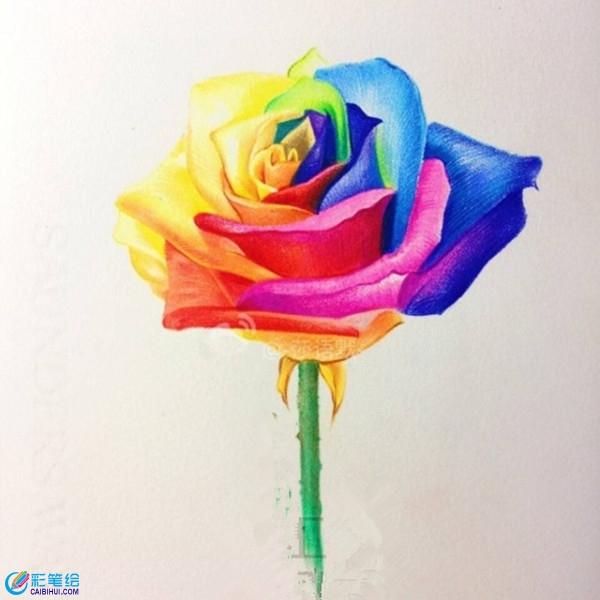 怎么画七彩玫瑰?彩铅玫瑰手绘图片教程