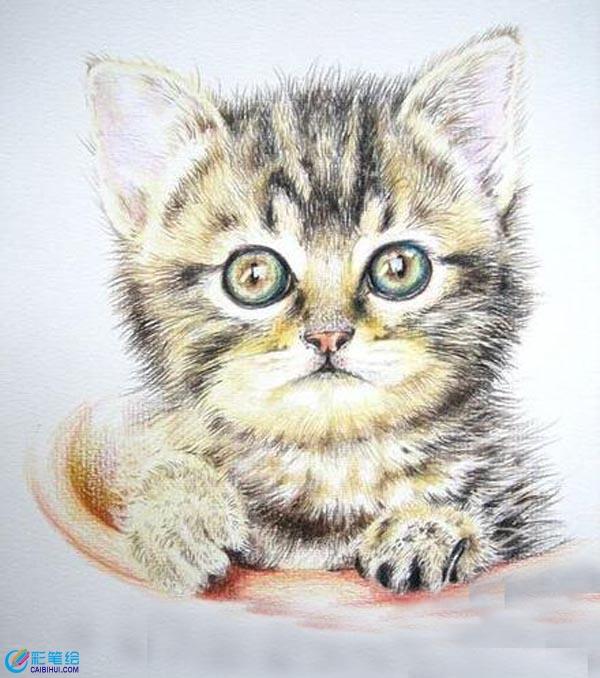 彩铅画猫咪- 彩铅画素描水彩画-彩笔绘