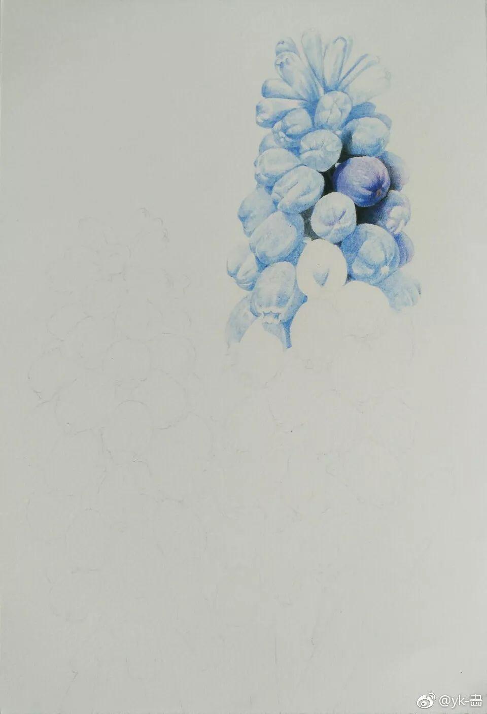 好看蓝色风信子手绘彩铅画