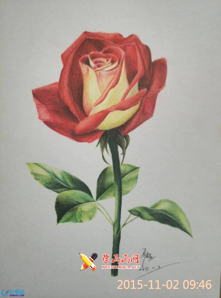 彩铅画玫瑰花过程