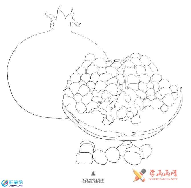 彩铅手绘教程_石榴的画法(1)