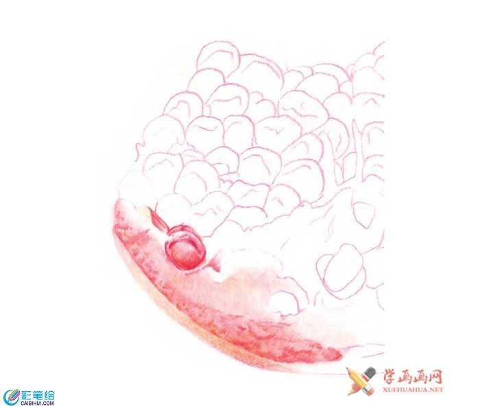 彩铅石榴的画法-国画书法彩铅画水彩画素描-彩笔绘