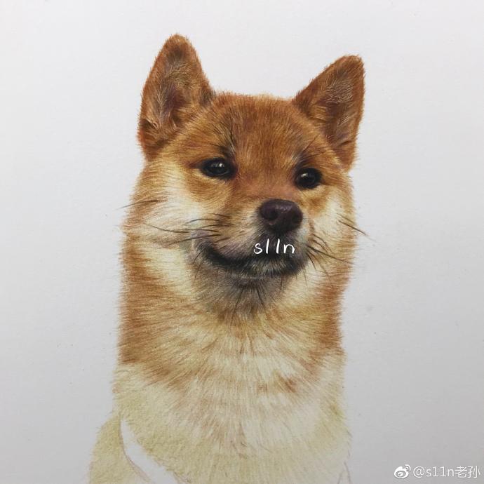 彩铅画秋田犬