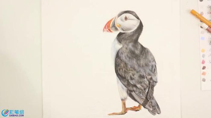 彩铅手绘鸟儿羽毛