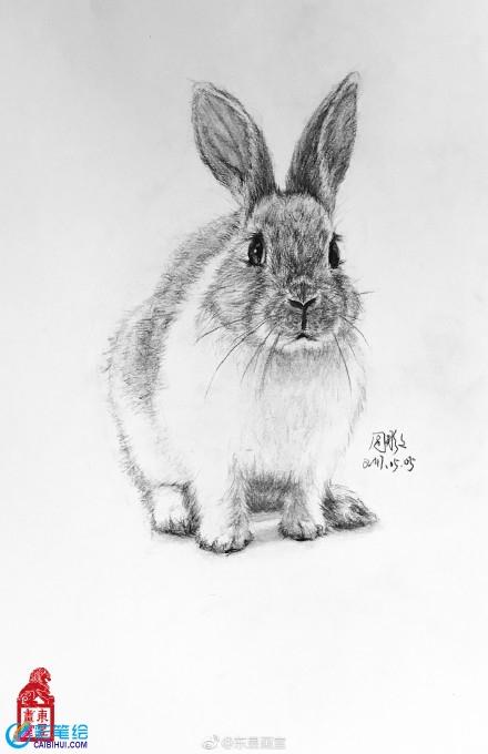 素描画动物作品欣赏