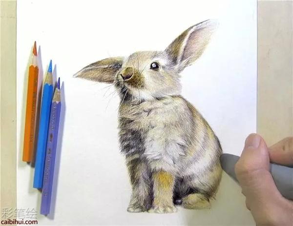 彩铅画可爱蠢萌蠢萌小动物,哈哈