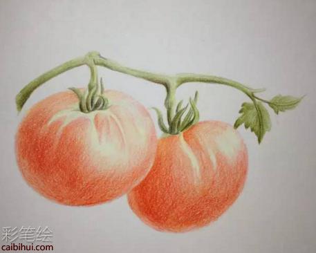 彩铅画西红柿小教程- 素描彩铅画画水彩-彩笔绘