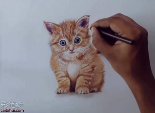彩铅画猫咪步骤教程- 素描彩铅画画水彩-彩笔绘