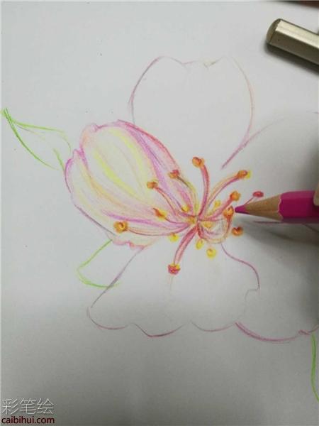 樱花彩铅手绘教程