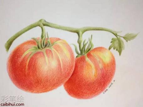步骤十:进行调整细节,补充一下没注意的地方,彩铅画西红柿就完成了.
