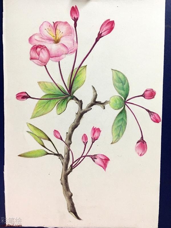 彩铅手绘唯美花卉教程