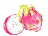水彩画<font color='red'>水果</font>系列之火龙果