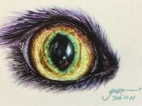 彩铅画画动物系列之动物<font color='red'>眼睛</font>