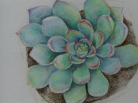 彩铅自学之<font color='red'>多肉</font>植物的画法