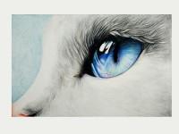 萌宠系列用彩铅画教你画猫<font color='red'>眼睛</font>