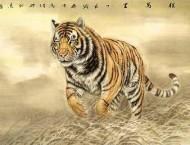 中国画艺术之老虎的画法