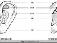 漫画教学视频—耳部的构造及画法