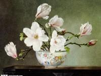 油画教程之玉兰花的画法