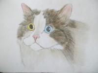 彩铅画猫眼睛详解步骤图解
