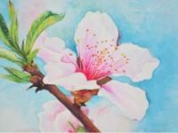 用水彩教你画一枝粉透的桃花