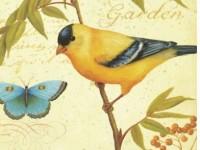油画绘画一只鸟教程