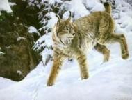油画-绘画野生动物的画法详解
