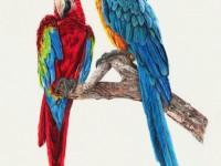 彩铅画<font color='red'>鸟</font>类欣赏