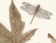 美国画家水彩笔下的鸟儿昆虫与自然