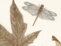 美国画家水彩笔下的<font color='red'>鸟</font>儿昆虫与自然