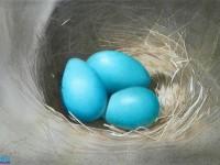 这是什么?一窝窝水彩画的<font color='red'>鸟</font>蛋!