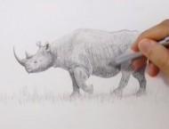 铅笔素描画犀牛