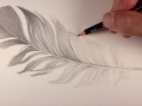 素描手绘漂亮的羽毛