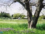 日本画家的水彩画风景作品