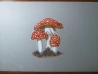 彩铅画可爱的小蘑菇