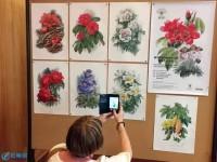 最真实的水彩植物<font color='red'>花</font>鸟画
