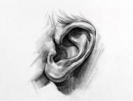素描人物耳朵怎么画