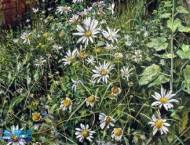 英国水彩画家的写实水彩画风景