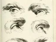 素描眼睛参考图