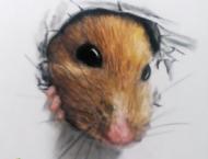 彩铅手绘立体小老鼠