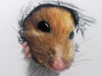 <font color='red'>彩铅</font>手绘立体小老鼠