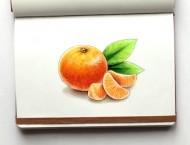 马克笔画写实桔子