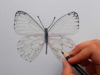 <font color='red'>彩铅</font>画一只漂亮的蝴蝶