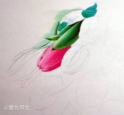 彩铅手绘——手捧郁金香,原来可以这么美!